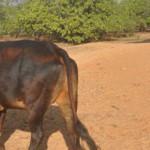 Govindalaya-Four